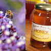 Cliffords Honey Farm, Kangaroo Island Ligurian Bee Sanctuary, Australia