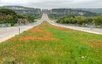 360 Bridge Wildflowers 4.1.15 Reduced