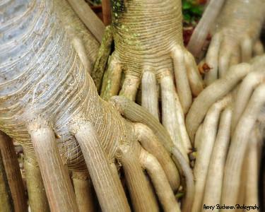 Creppy Fingers-