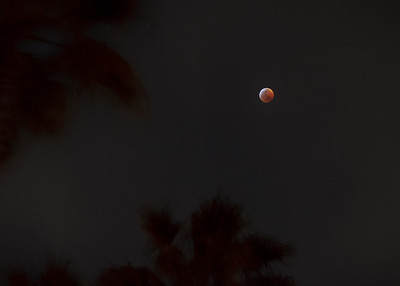 The lunar eclipse approaches near totality.  I reduce contrast in this exposure to give the moon some context...two of the palm trees in my back yard are just visible