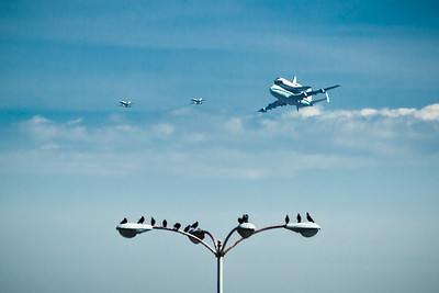 Even birds are eager to see the shuttle