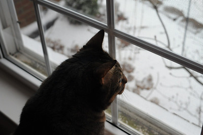 Izzy ponders the white stuff outside.