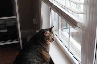 Watching something intently.