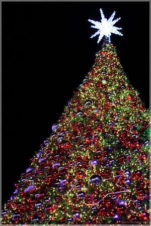 2010 Gaylord Christmas
