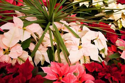 Christmas Card Photos 2011