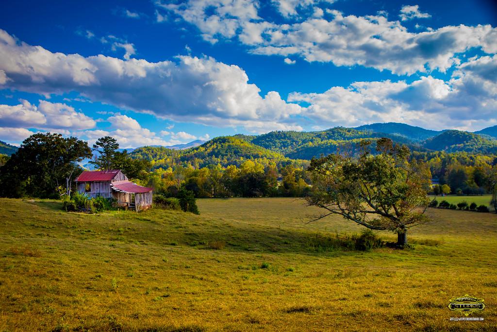 TN Tree Barn 24x36WLogo-2038