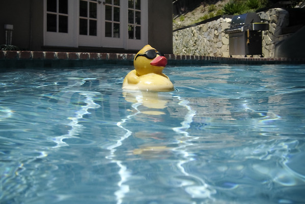 Now that I think about it, our little rubber ducky has also spent the past several months in the pool