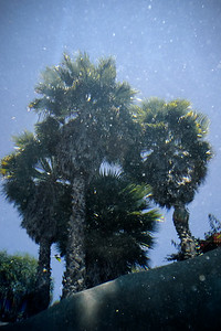 Another shot of the palms from underwater