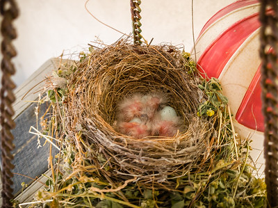 Or is it three? Four, perhaps?  I only see two eggs left.