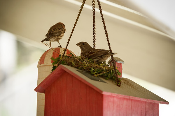 We have been referring to these two finches as love birds...as they're obviously getting ready to start a family