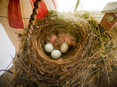 12 days after discovering the eggs, at least two have hatched
