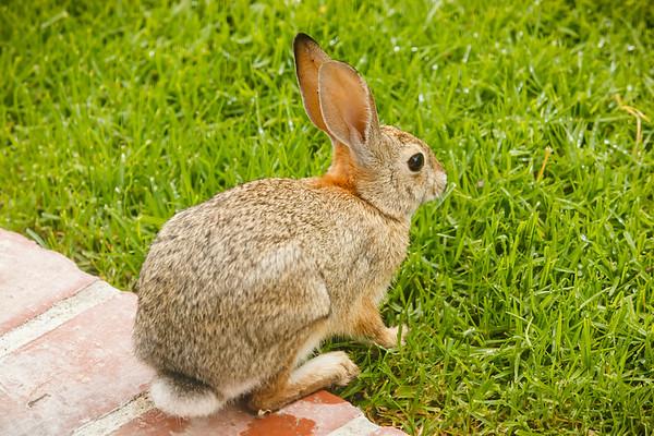 Good morning, little bunny!