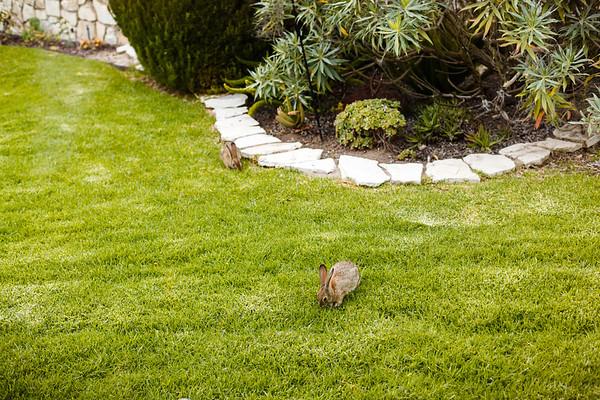 Good evening, little bunnies!