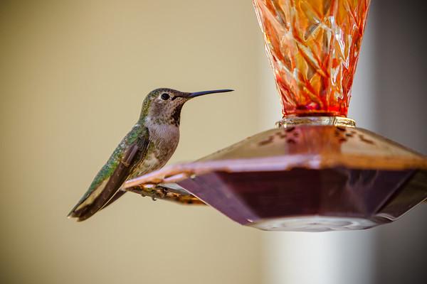 #Hummies #Hummingbird #SocialDistancing #SaferAtHome #SaferOnFeeder