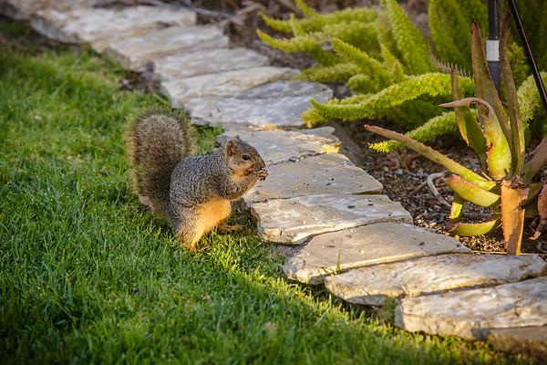 Two squirrels scavange under the bird feeder