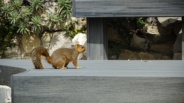 He hops up on our Trex deck