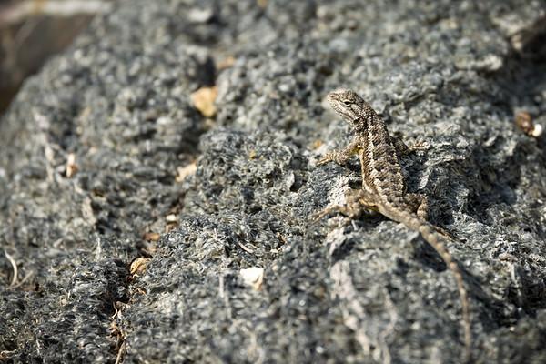 Tiny lizard vs big lens