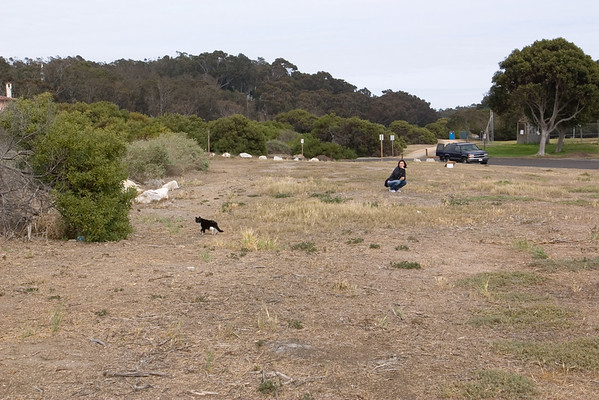 We find cats (as expected) near Malaga Cove School
