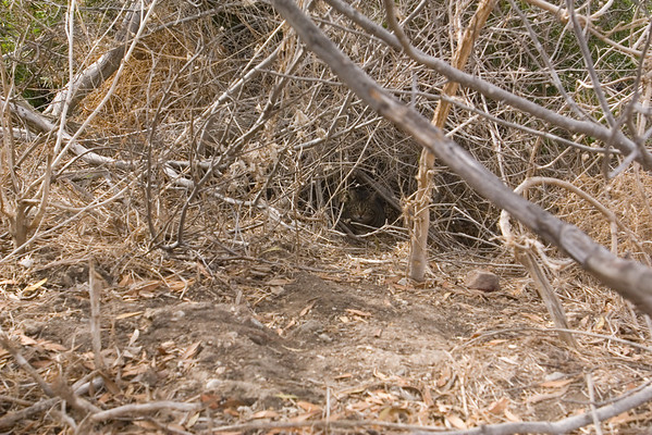 I need a longer lens to better view kitties hiding in the brush