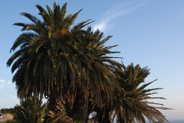 I find palm trees, not trails as I continue my way above the coast
