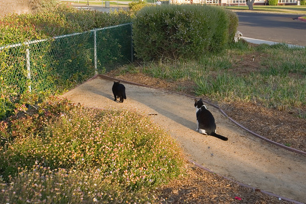 Before moving on, I decide to follow one of the cats and I soon come across another