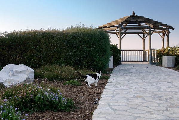 A kitty inspects where sunlight hits the gazebo near Malaga Cove School. I took pre-wedding photographs of my friend Pete here a few years back, so I figure I should keep it in mind for future sessions