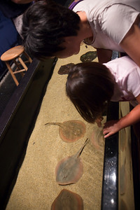 Kids seem to really like petting the rays