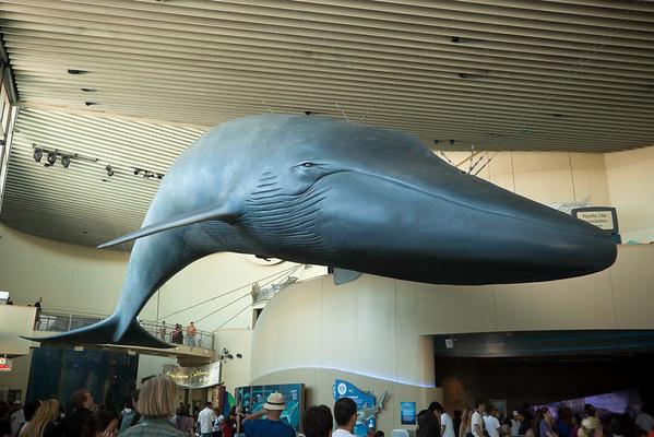 """""""I speak whale"""""""