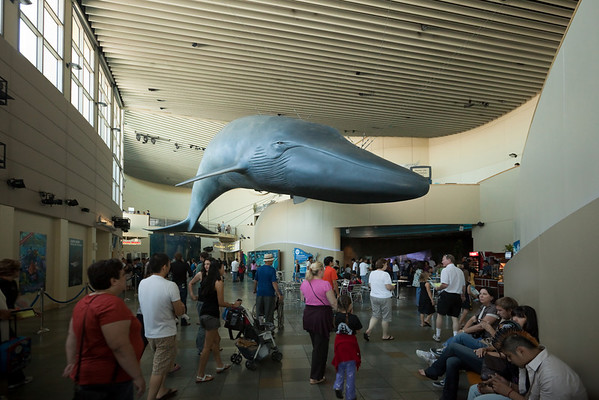 A blue whale model hangs over the main hall
