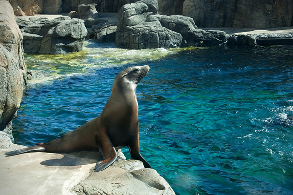 This sea lion is just chillin'...
