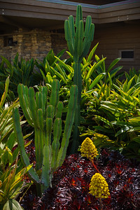 Valerie asks me to photograph the resort's California-native landscaping for reference