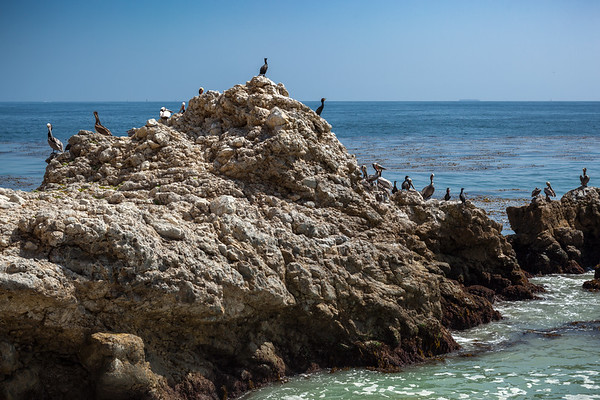 Pelicans (and some other birds) on the rocks