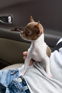 Minh's dog