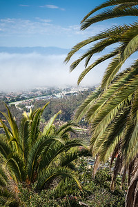 Palm trees with a view