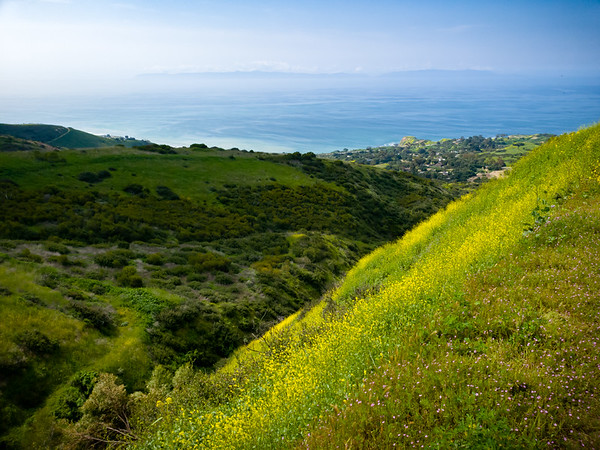 Wildflowers grow most abundantly on south and east facing slopes of Portuguese Canyon