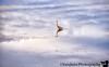 October 4, 2020 - Great blue heron, Celery Bog reflections