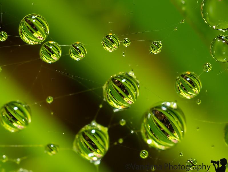 June 23, 2013 - Drop refractions over a cobweb