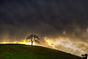 February 1, 2016 - the lone tree under storm