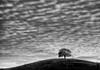 October 23, 2014 - the lone tree<br /> <br /> 5th post in the 5 day black and white challenge. I now nominate Ilene Samowitz to participate in the BW challenge - post a BW shot daily x 5 days , and challenge another photographer daily to do the same.
