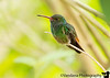 April 1, 2016 - the hummingbird<br /> <br /> Back to San Jose today, for our early morning flight back to San Francisco tomorrow ! Too short a trip ! 3 charter flights to get around Costa Rica, boat rides, hikes in the rainforest, a busy week comes to an end ! <br /> <br /> Arjun's first long, land trip abroad and he did so well ! He's full of info on endangered animals, his favorite topic :), my little animal savior !