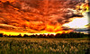 June 6, 2010 - Sunset in the park, Rockford, IL<br /> <br /> Looks like we have brought the New mexican skies here to IL!
