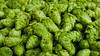 Cascade Hops Screensaver