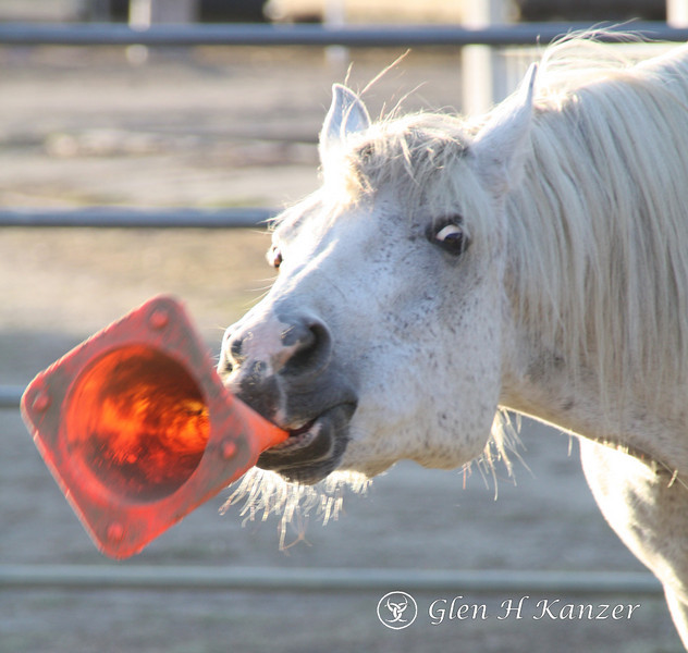 Little Horse White, see how he blows