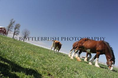 Wilke Clydesdale Farm