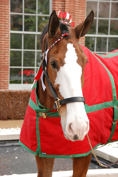 1    CLYDESDALE