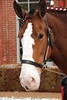 3    CLYDESDALE