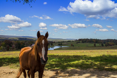 Horse, Water Wheel Farm, Fredon, New Jersey