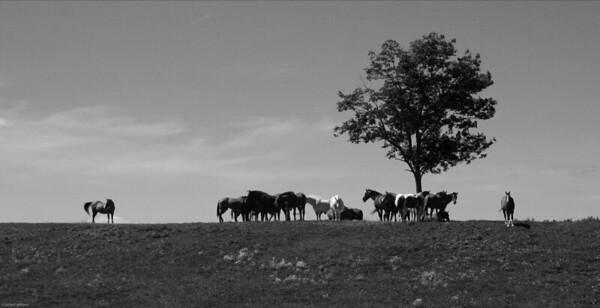 Horses, Water Wheel Farm