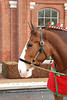 2    CLYDESDALE