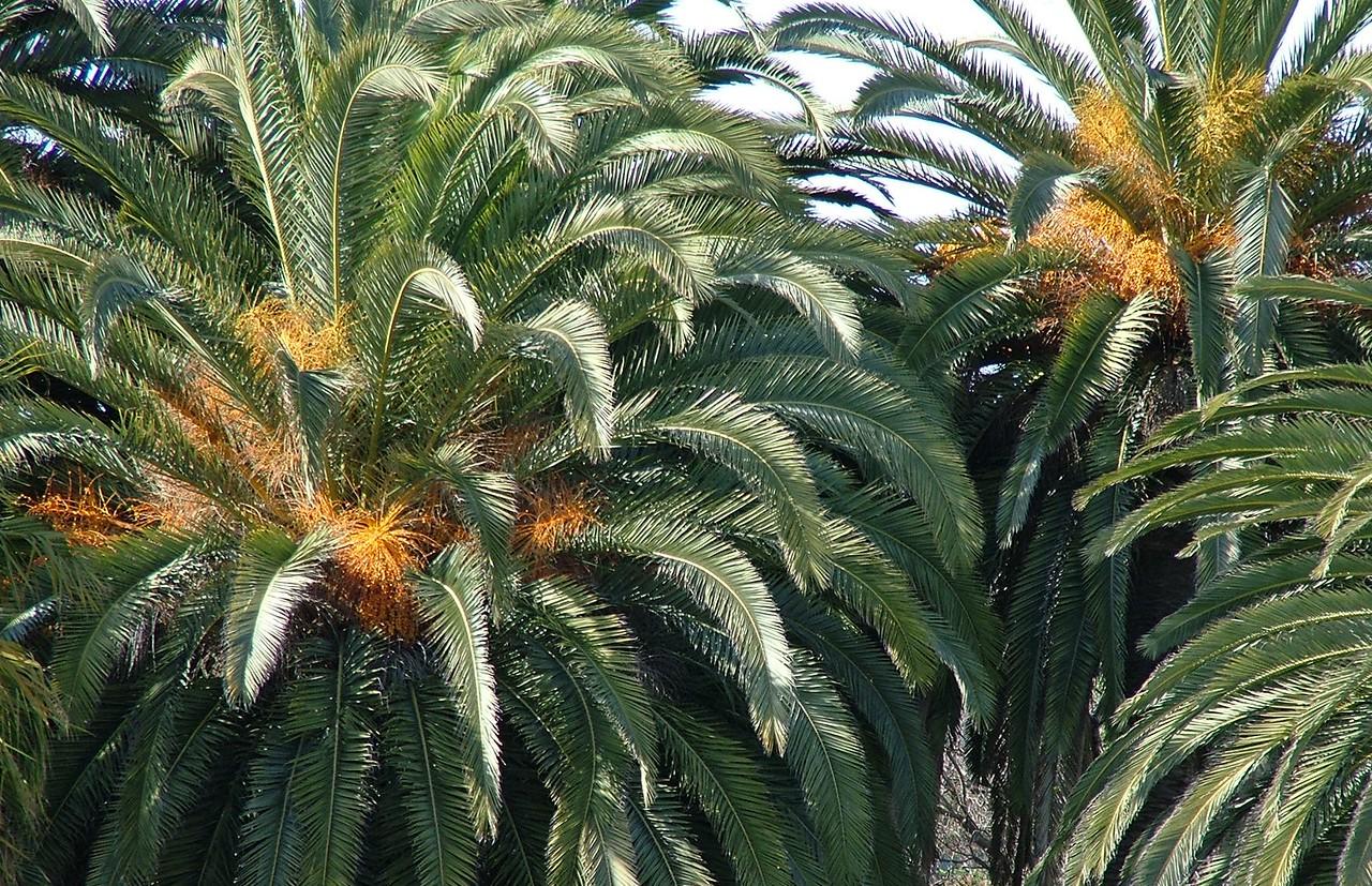 Malibu Palms